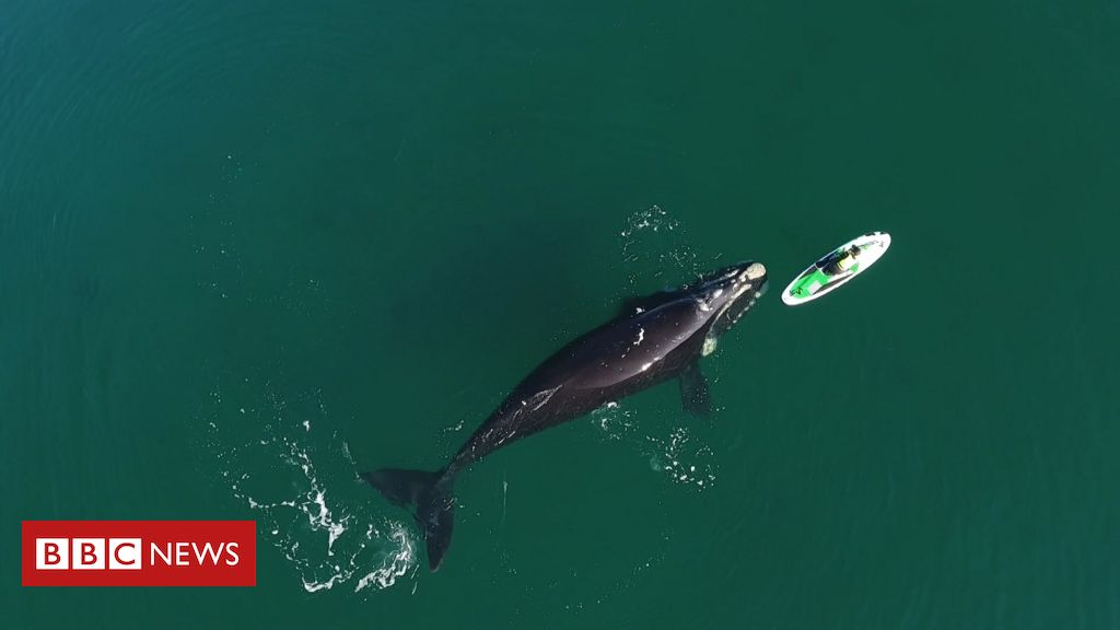 The impressive encounter between whales and swimmers in Argentina