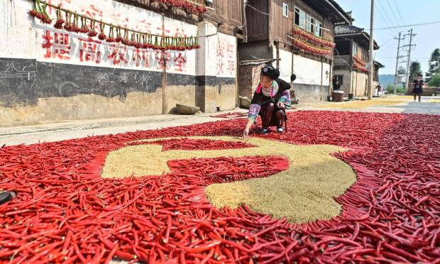 A farmer makes the Chinese Communist Party flag with grains and red peppers while other men dry their crops in Congjiang, in southwest China's Guizhou Province.  Photo: STR/AFP