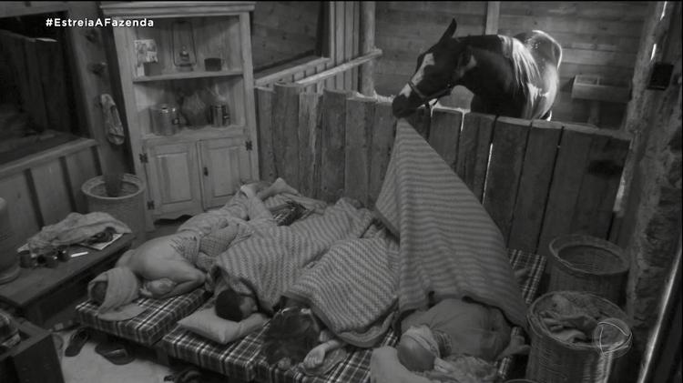 Farm 2021: The horse wakes up the pawns of the stall - Play / PlayPlus - Play / PlayPlus