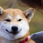 The dollar invested in the cryptocurrency Shiba Inu a year ago achieved 2 million Brazilian riyals